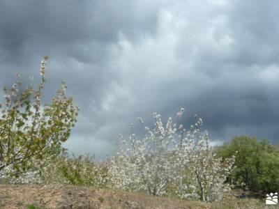 Cerezos flor_Valle del Jerte;montañeros de monfrague senderismo la rioja la mira gredos puente almu